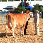 Greensfields Champion Devon 2010
