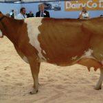Lodor Valerie Livestock Show 2010