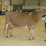 Champion Dairy Show 2012