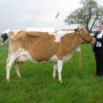 Guernsey Champion, Graylands Elissa 7th.