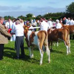 5 calves in Class 1 at Stithians