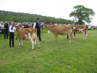 Heifer In Milk Class