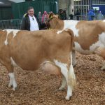 Senior cows