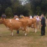 Cows class