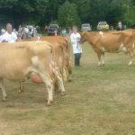 Class 2 cows
