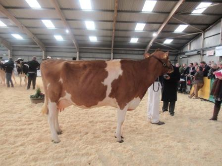Intermediate Cow-Copy